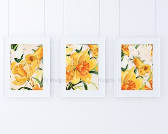 Daffodils, artist greeting cards, Handmade Cards,floral card, Art cards, Pack of Three cards, artist print, floral art print
