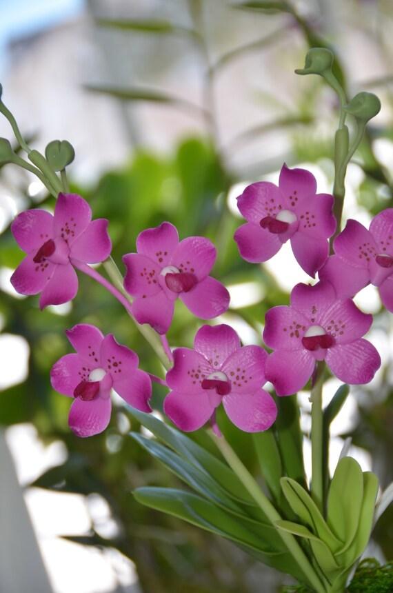 Polymer Clay Flower Magenta Vandamedium Orchid Stem