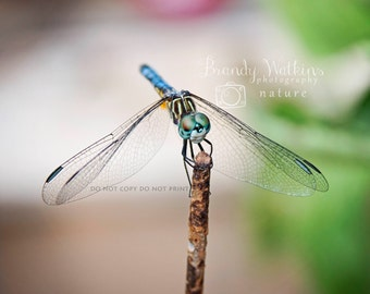 Dragonfly picture, fine art photography print, dragonfly art, nature photography, nature photograph, insect picture, wall decor