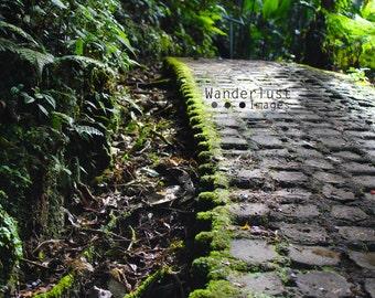 Monteverde Cloud Forest Pathway