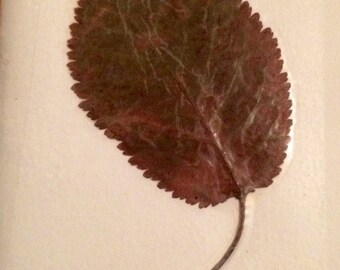 Pressed leaf journal #autumn