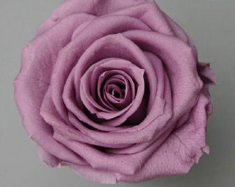 Preserved *Natural Lovely Roses, 3 inch, Preserved  Lavender Roses,Rose Bouquet, Preserved Rose Bouquet  Simply Beautiful !