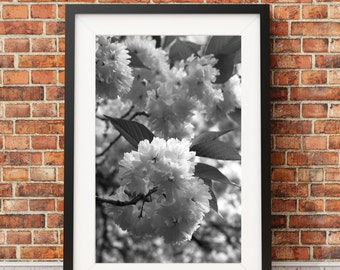 Cherry Blossoms, Cherry Trees, Floral Print, Blossoms, Petals, Flowering Tree, Japanese Cherry Blossom // FRAME NOT INCLUDED