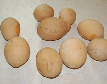 "9 Dried Craft Gourds, Egg Shaped, 3 - 4"" tall"