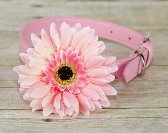 Gerbera Daisy Dog Collar Flower, Dog Collar Accessory, (Collar not included), Collar Attachment, Pink Flower, Dog Accessory