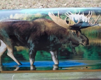 Mailbox with Moose on both sides.