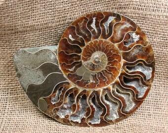Ammonite Fossil Half - 5.9 inches - Item 73566
