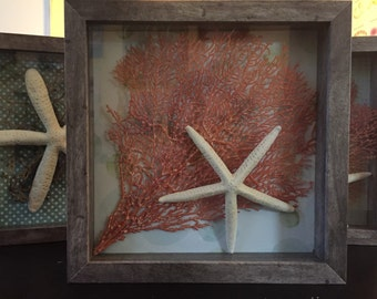 Framed Sea Fan with Baby Starfish