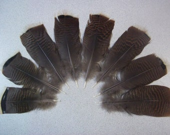 Wild Turkey feathers, Rio Grande Turkeys, 8 Small Tail feathers, Supplies, No Dyes, All Natural, Free Roam, Floral accents, Smudging