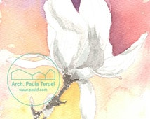 Watercolor coloured illustration of magnolia flower. Drawing colored nature (HQ reproduction)