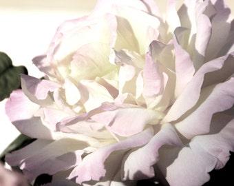 Rose - Soft Colors