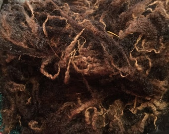 Blue Faced Leicester LAMB CHOCOLATE BFL 100g fleece locks Pedigree - British wools raw fleece. Unwashed. Gorgeous lustre