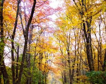 Autumn Road  Canvas Print