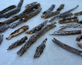 Cholla Cactus Pieces     FREE SHIPPING