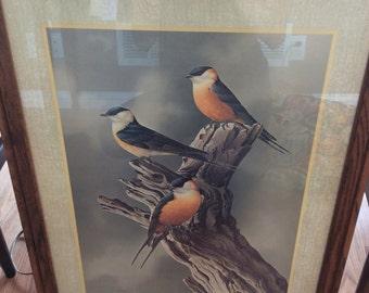 Vintage 1975 Framed Bird Print By Simon Calburn