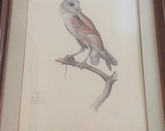 J.F. Landsdowne Barn Owl Limited Edition Custom Framed Print