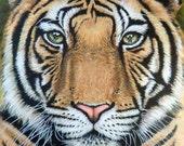 Tiger's Last Roar - Kunstdruck 30x40 cm, bedrohter Tiger