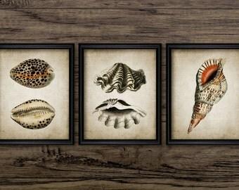 Seashell Print Set of 3 - Vintage Seashell Book Plate Art - Marine Art - Printable Art - Set Of Three Prints #185 - INSTANT DOWNLOAD
