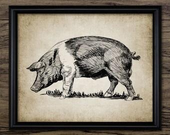 Vintage Pig Print - Pig Illustration - Pig Decor - Pig Farming Decor - Digital Art - Printable Art - Single Print #613 - INSTANT DOWNLOAD