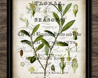 Vintage Olive Tree Print - Kitchen Art - Botanical Print - Olive Tree Art - Printable Art - Single Print #1086 - INSTANT DOWNLOAD