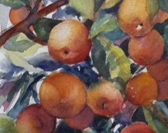 Watercolor painting of oranges from botanical garden, wall art, home decor, orange, fine art, fruit painting, botanical art,