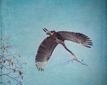 Wildlife Photography, Nature Art, Heron Print, Blue Herons, Nature Prints, Woodland Art, Bird Wall Art, Bird Decor, Bird Gift, Wall Decor