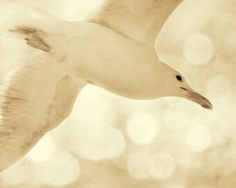 Bird Print, Nature Photography, Large Wall Art, Neutral Wall Art, Bird Wall Decor, Seagull, Sea Gull, Off White,Beige,Bird Decor,Beach Decor