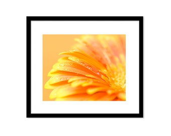 Flower photography. Orange flower photo print. Orange Daisy photography wall art. Macro flower petals giclee print. Floral wall art.