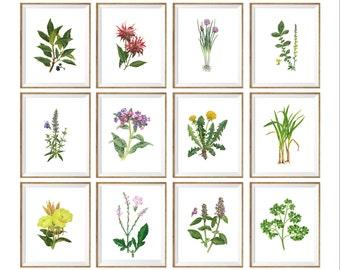 Set of 12 Vintage illustration Flowers Art Print, wild flower prints, flower chart, floral art set, botanical prints set, floral prints *12*