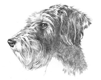 Custom pencil portrait drawing from photo. by professional artist Margaret Scanlan. Baby - children - adult - pet