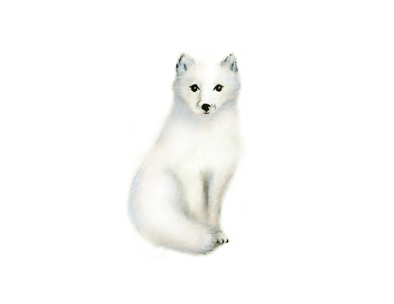Arctic Fox Baby Animal...