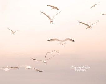 Flock of Seagulls Original Photography