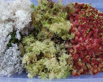 Holiday Moss Mix!