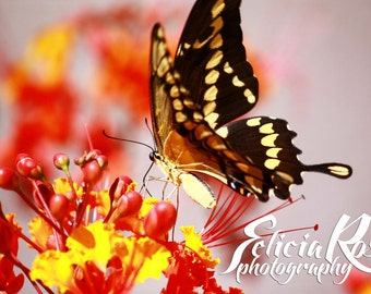 Digital Download, Instant Download, Printable Art, Wall Art, Home Decor, Nature Photography, Butterfly And Flowers