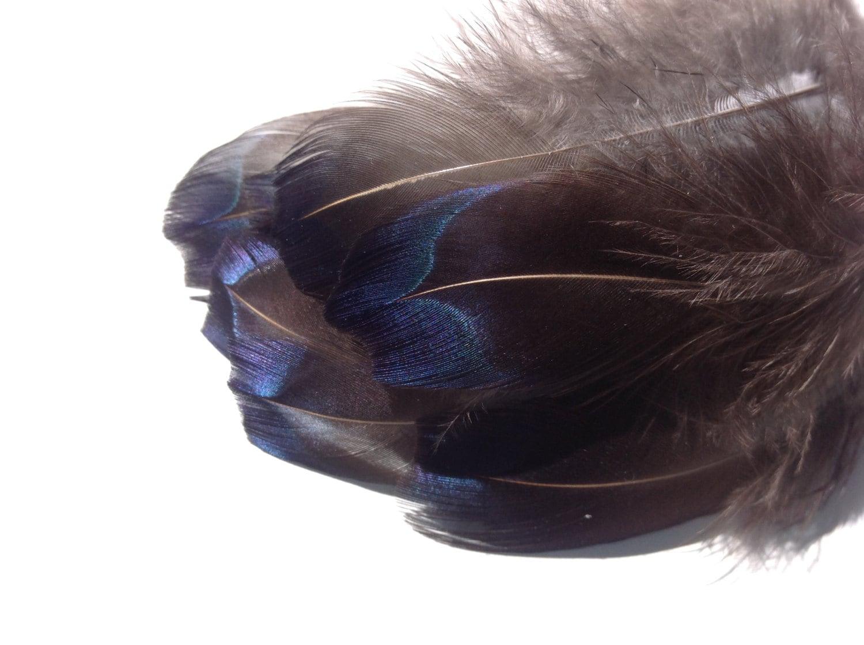 Turquoise veren blauwe veren blauwe bruiloftsveren diy - Blauwe turquoise decoratie ...