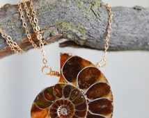 Spring Sale Polished Ammonite Fossil-Abundance-Prosperity-Depression-Magical Protection-Wisdom-Karmic Cleanser-Dainty Necklace-Gold Filled 1