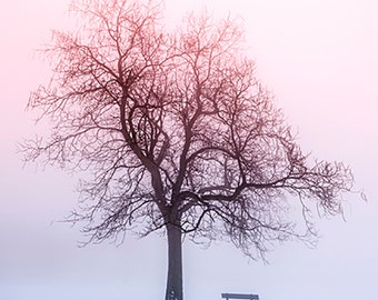 Winter Trees in Fog - SKU 0229