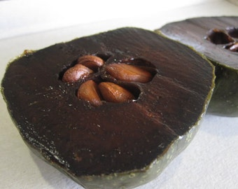 Diospyros Digyna BLACK SAPOTE Persimmon Chocolate Pudding Fruit * 5 Seeds * Very Fresh Seeds * RARE
