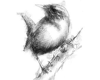 Wren bird | Limited edition fine art print from original drawing. Free shipping.