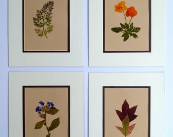 Real Pressed Leaf Flower Botanical Art Herbarium Collection 8x10 Oak Leaf Hydrangea Queen Anne's Lace Phlox Pansy Prematted