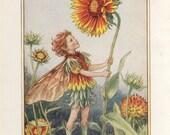 Flower Fairies THE GAILLARDIA FAIRY Vintage Print c1930 by Cicely Mary Barker