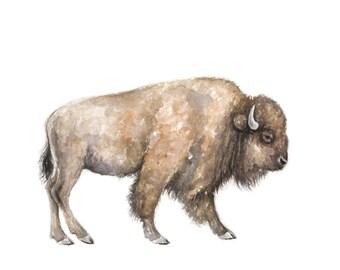 Buffalo Watercolor print- buffalo Painting - Southwestern Painting - buffalo - bison - southwest art - buffalo art - farm animal - wild