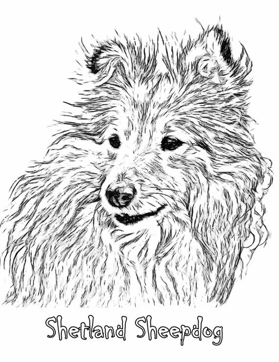 Sheepdog Art Print Sheltie Dog Line Art Sheltie Dog Art
