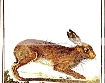 Vintage Hare Rabbit Brown Bunny Woodland Art - Digital Download Printable Image - Paper Crafts Scrapbook Altered Art - Antique Illustration
