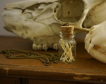 Snake Ribs Necklace, Curiosity Vial Necklace, Vulture Culture, Bone necklace, Taxidermy Jewelry