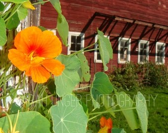 Barn & flowers - photo