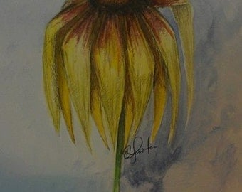 Black-Eyed Susan Water color