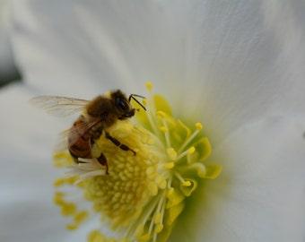 Bee Photograph #21