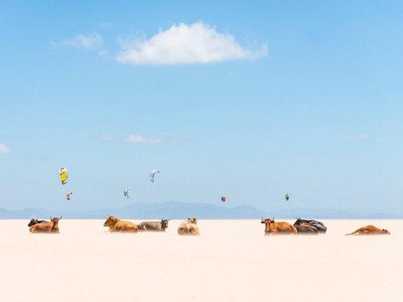 "Cow Prints. ""Cows and Kites"",  Photographic Print, Cow Photography, Wildlife Print, Tarifa Beach, Fine Art Photography, Wall Decor"