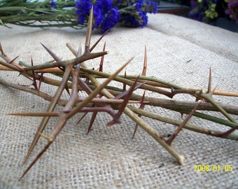 Thorn acacia blackthorn honey twigs thorntree sticks dried branches protection spell locust tree pagan